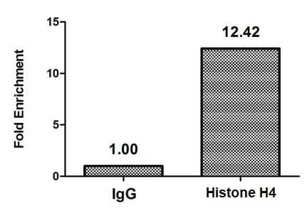 ChIP - Anti-Histone H4 (butyryl K16) antibody (ab240615)