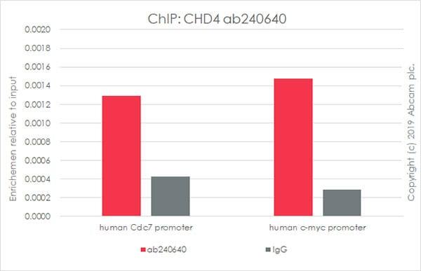 ChIP - Anti-CHD4 antibody [EPR22953-38] (ab240640)
