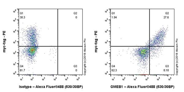 Flow Cytometry (Intracellular) - Anti-GMEB1 antibody [EPR23056-62] (ab240646)