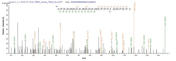 Mass Spectrometry - Recombinant Mouse Calreticulin protein (His tag) (ab240775)