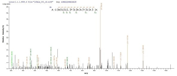 Mass Spectrometry - Recombinant Human Cathepsin F protein (His tag) (ab240858)