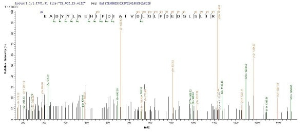 Mass Spectrometry - Recombinant <em>E. coli </em> Transcriptional regulatory protein PhoP (Tagged) (ab240864)