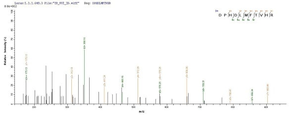 Mass Spectrometry - Recombinant Pig P cadherin protein (His tag) (ab240870)