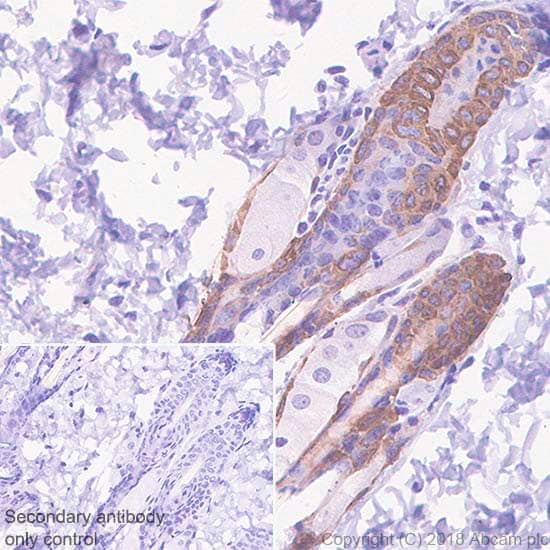 Immunohistochemistry (Formalin/PFA-fixed paraffin-embedded sections) - Anti-Bax antibody [SP47] - BSA and Azide free (ab240930)