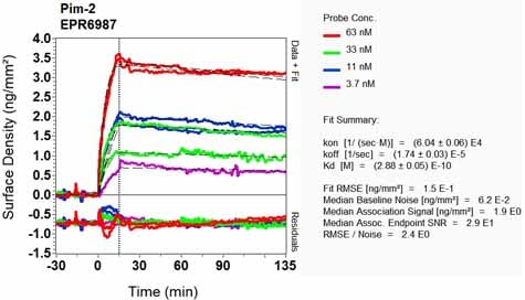 OI-RD Scanning - Anti-PIM2 antibody [EPR6987] - BSA and Azide free (ab240951)