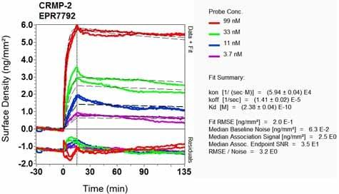 Other - Anti-CRMP2 antibody [EPR7792] - BSA and Azide free (ab240952)