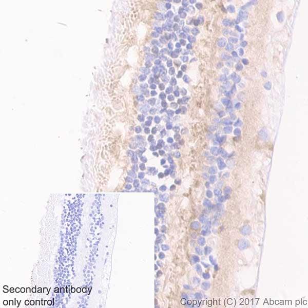 Immunohistochemistry (Formalin/PFA-fixed paraffin-embedded sections) - Anti-Optineurin antibody [EPR20654] - BSA and Azide free (ab240979)