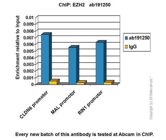 ChIP - Anti-KMT6 / EZH2 antibody [EPR20108] - ChIP Grade – BSA and Azide free (ab240992)