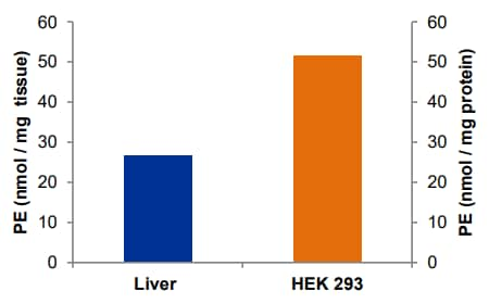 Phosphatidylethanolamine content in rat liver (100 µg wet tissue) and HEK 293 cells (25 µg protein).