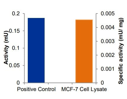LOX activity in positive control and MCF-7 lysate.