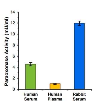 Quantification of PON1 activity in serum/plasma samples.
