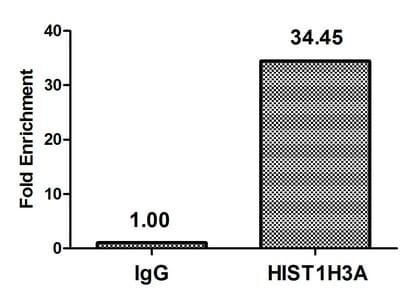 ChIP - Anti-Histone H3 (acetyl K37) antibody (ab241054)