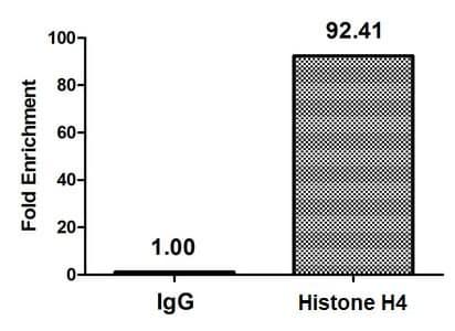 ChIP - Anti-Histone H4 (butyryl K8) antibody (ab241246)