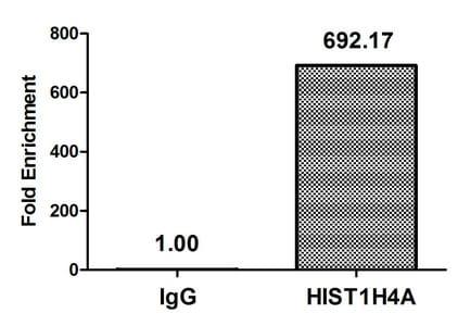 Western blot - Anti-Histone H4 (propionyl K5) antibody (ab241252)