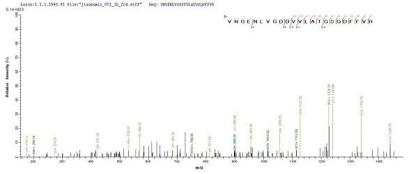 Mass Spectrometry - Recombinant Yersinia pestis F1 antigen protein (His tag) (ab241388)