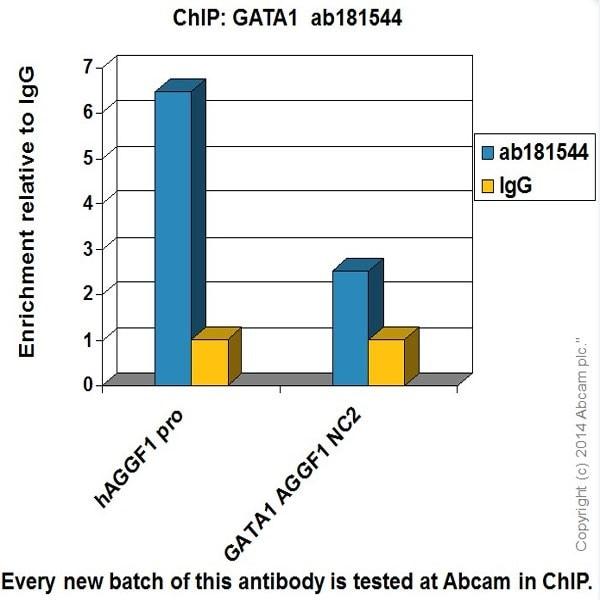 ChIP - Anti-GATA1 antibody [EPR17362] - BSA and Azide free (ab241393)