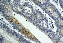 Immunohistochemistry (Formalin/PFA-fixed paraffin-embedded sections) - Anti-GAL4 antibody [EPR12710(B)] - BSA and Azide free (ab241394)