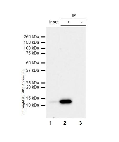 Immunoprecipitation - Anti-MCP1 antibody [EPR21025] - BSA and Azide free (ab242013)