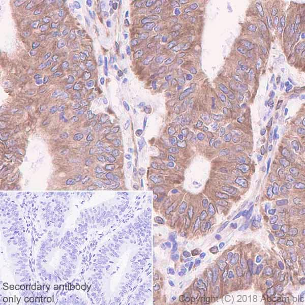Immunohistochemistry (Formalin/PFA-fixed paraffin-embedded sections) - Anti-TMEM173 antibody [EPR13130-55] - BSA and Azide free (ab242019)
