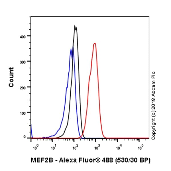 Flow Cytometry - Anti-MEF2B antibody [EPR22193-26] (ab242058)