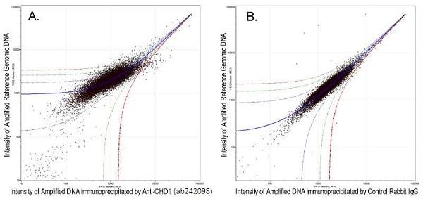 ChIP on chip - Anti-Chd1 antibody (ab242098)