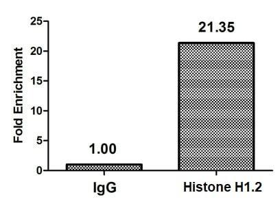 ChIP - Anti-Histone H1.2 (2-hydroxyisobutyryl K158) antibody (ab242273)