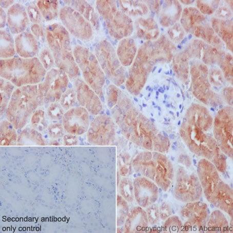 Immunohistochemistry (Formalin/PFA-fixed paraffin-embedded sections) - Anti-Meckelin antibody [EPR17187] - BSA and Azide free (ab242412)