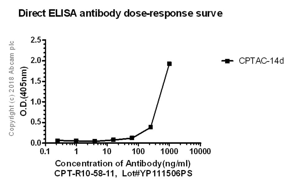 ELISA - Anti-Ferritin Light Chain antibody [CPT-R10-58-11] (ab243096)