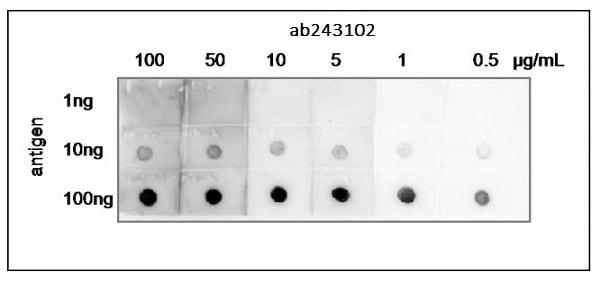 Dot Blot - Anti-Heat-labile enterotoxin B chain antibody (ab243102)