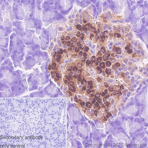 Immunohistochemistry (Formalin/PFA-fixed paraffin-embedded sections) - Anti-Proinsulin antibody [3B6-19-1] (ab243141)