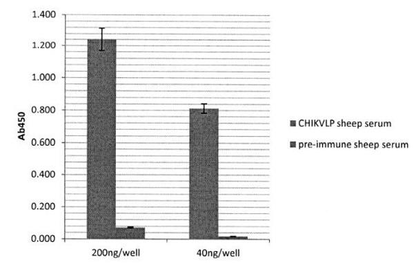 ELISA - Recombinant Chikungunya Virus protein (Fc Chimera) (ab243285)