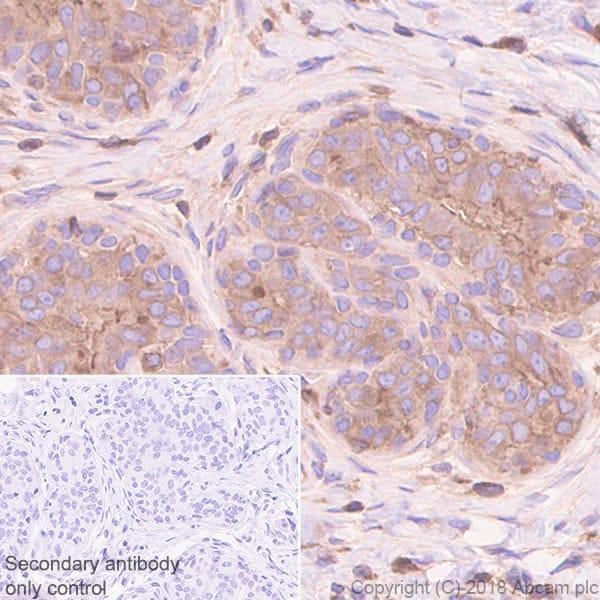 Immunohistochemistry (Formalin/PFA-fixed paraffin-embedded sections) - Anti-RAB8A antibody [MJF-R22-79-3] - BSA and Azide free (ab243568)