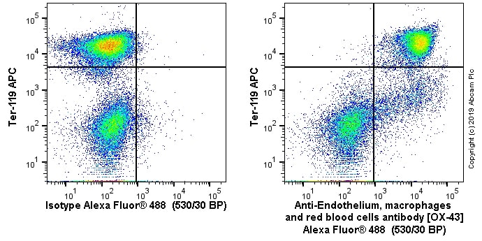 Flow Cytometry - Anti-Endothelium, macrophages and red blood cells antibody [OX-43] (ab243850)