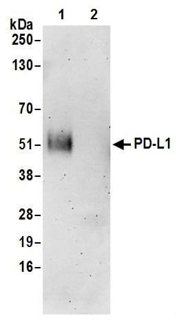 Immunoprecipitation - Anti-PD-L1 antibody [BLR020E] (ab243877)