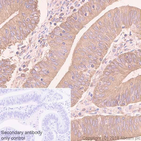 Immunohistochemistry (Formalin/PFA-fixed paraffin-embedded sections) - Anti-eIF1A antibody [EPR12466(B)] - BSA and Azide free (ab243919)