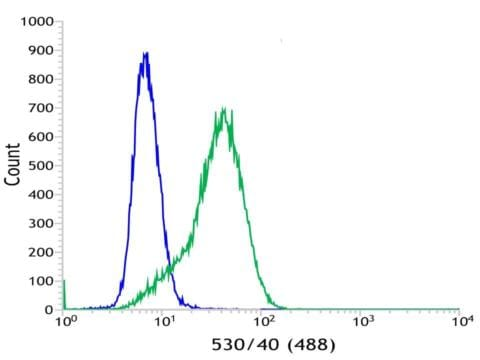 Flow Cytometry - Anti-Bcl6 antibody [SP155] - BSA and Azide free (ab243920)
