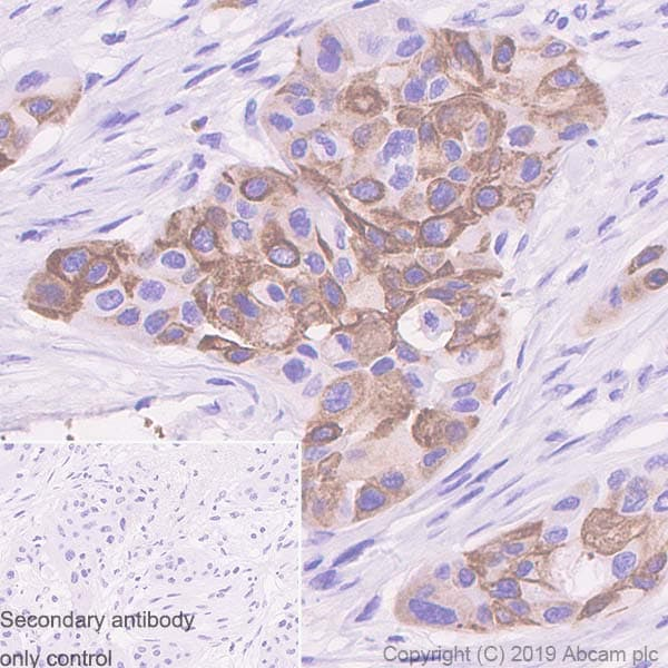 Immunohistochemistry (Formalin/PFA-fixed paraffin-embedded sections) - Anti-MUC4 antibody [SP241] - BSA and Azide free (ab243921)