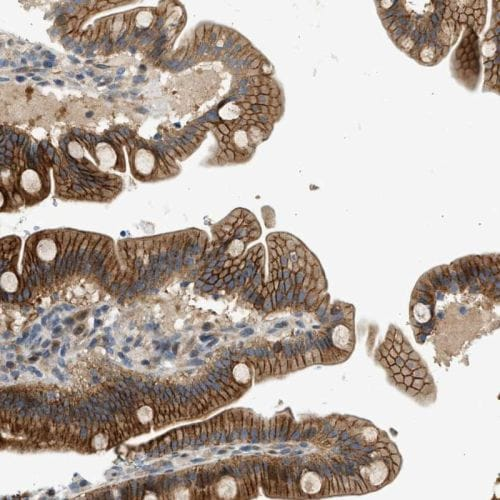 Immunohistochemistry (Formalin/PFA-fixed paraffin-embedded sections) - Anti-NRSN2 antibody (ab244348)