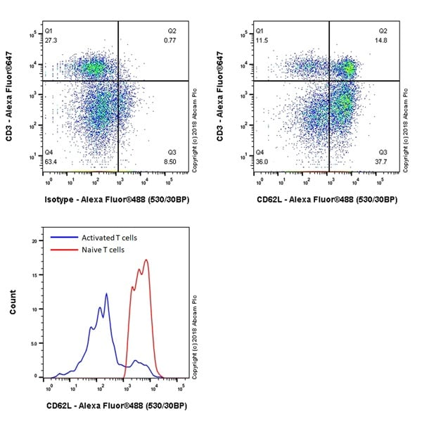 Flow Cytometry - Anti-CD62L antibody [EPR22188-297] - BSA and Azide free (ab245124)