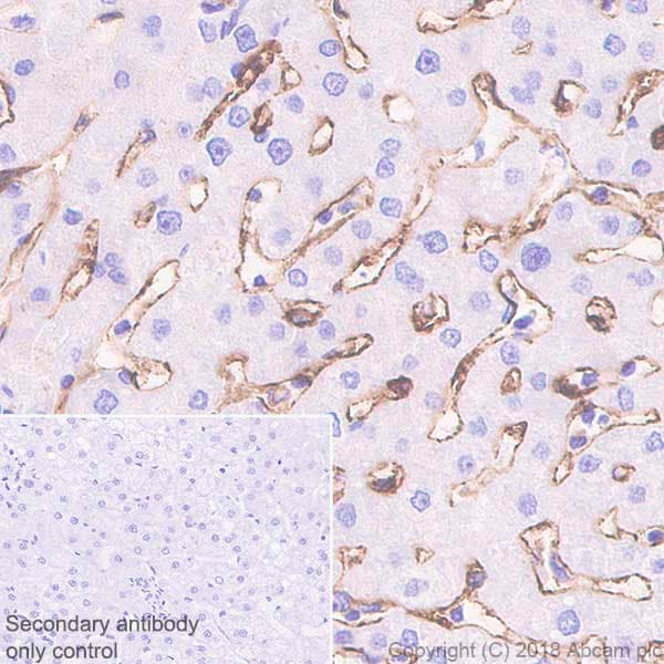 Immunohistochemistry (Formalin/PFA-fixed paraffin-embedded sections) - Anti-DC-SIGN + DC-SIGNR antibody [EPR22395-72] - BSA and Azide free (ab245207)