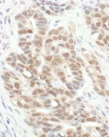 Immunohistochemistry (Formalin/PFA-fixed paraffin-embedded sections) - Anti-eIF-6 antibody (ab245532)