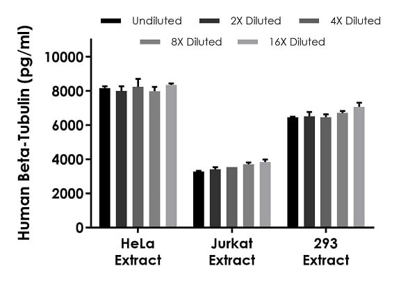 Interpolated concentrations of native Beta-Tubulin in human HeLa and 293 cell extract samples based on a 2 µg/mL extract load and Jurkat cell extract samples based on a 1 µg/mL extract load.