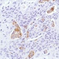 Immunohistochemistry (Formalin/PFA-fixed paraffin-embedded sections) - Anti-Sialoadhesin/CD169 antibody [SP216] - BSA and Azide free (ab245742)