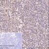 Immunohistochemistry (Formalin/PFA-fixed paraffin-embedded sections) - Anti-GST3 / GST pi antibody [EPR8263] - BSA and Azide free (ab245762)