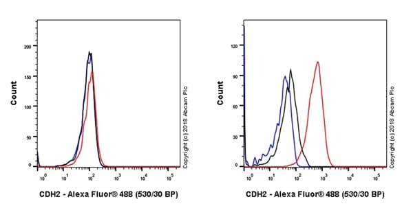 Flow Cytometry - Anti-N Cadherin antibody [EPR22397-264] - BSA and Azide free (ab245827)