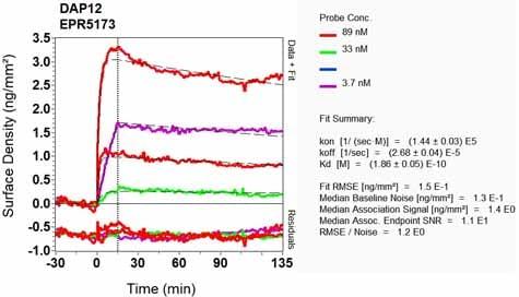 OI-RD Scanning - Anti-DAP12 antibody [EPR5173] - BSA and Azide free (ab246001)