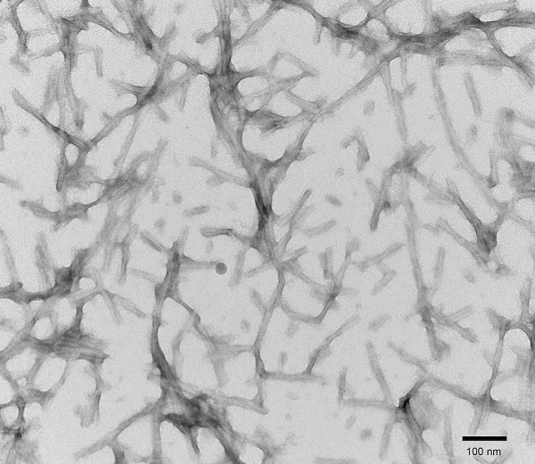 Electron Microscopy - Recombinant human Tau (mutated P301S) protein aggregate (Active) (ab246003)