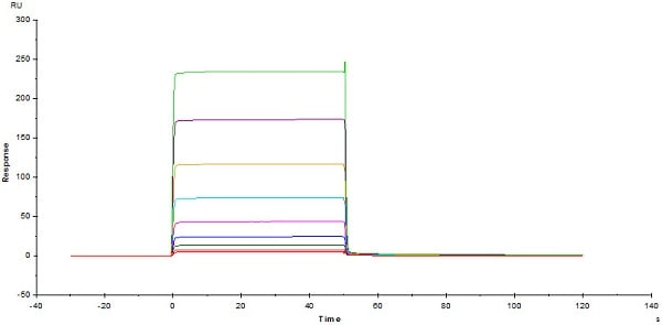Functional Studies - Recombinant human CD32B protein (Active) (Biotin) (ab246026)
