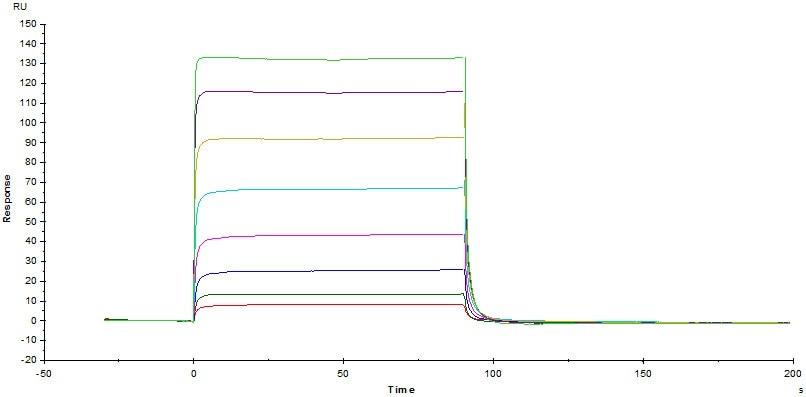 Functional Studies - Recombinant human CD16b protein (Active) (Biotin) (ab246039)