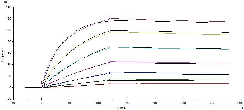 Functional Studies - Recombinant human CD64 protein (Active) (Biotin) (ab246071)